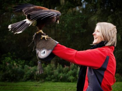 Cheshire Falconry open from 4th July